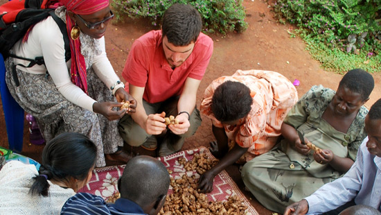 Northwestern student helping residents pick ginger